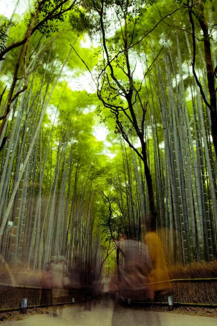 Load of bamboo globe