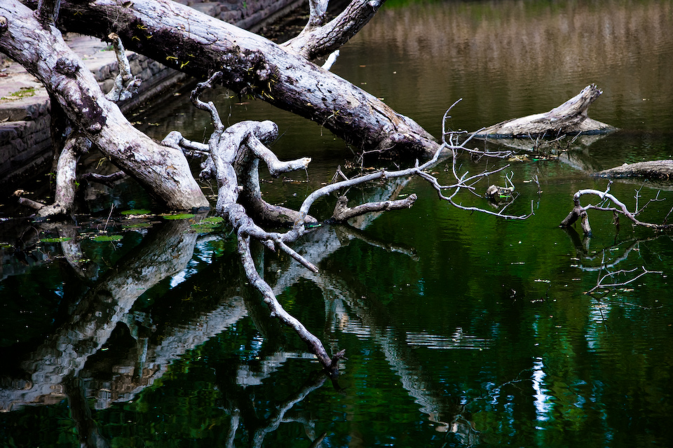 Trees in the pond.